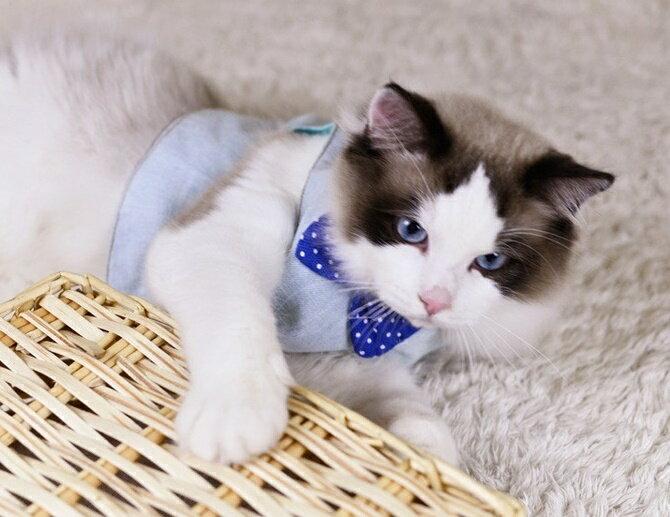 送料無料猫用ハーネスリードセットリーシュ胴輪胸当てベストネコ用ねこ用キャットCATお散歩お出掛け可愛いカラフルデニムジーンズドット柄水玉蝶ネクタイキャットウェアキャットウエアペットグッズ