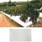 農業用 白色 反射 シート TSアップシート OA-10 1x50m 実用試用期間約5年 太陽の光を反射 果実の色付け 害虫避け 谷口産業 タ種 代引不可 個人宅配送不可