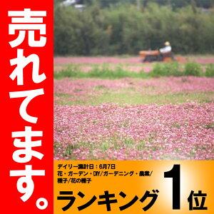 【種 5kg】 レンゲ 景観緑肥 ...