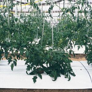 農業用光反射シートの種類と性能を解説【まとめ】 96