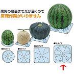 シンエツマットSL 西瓜用 150×150×H25 1,600枚 スイカ タ種【代引不可】
