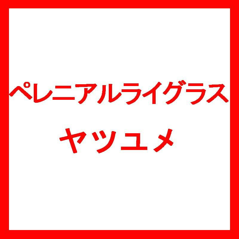 【種 10kg】 ペレニアルライグラス ヤツユメ 晩生 酪農 畜産 [播種期:4〜10月] 雪印種苗 米3【代引不可】