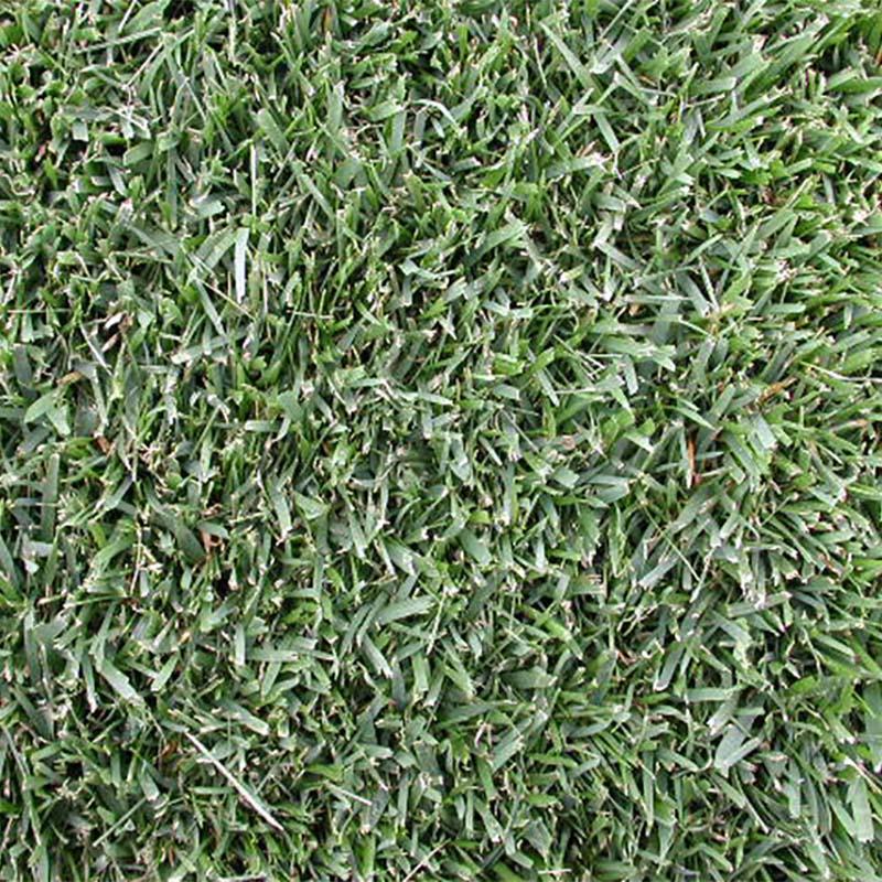 【種 10kg】 トールフェスク アリッド3 芝 緑化 [播種期:3〜10月] 雪印種苗 米3【代引不可】
