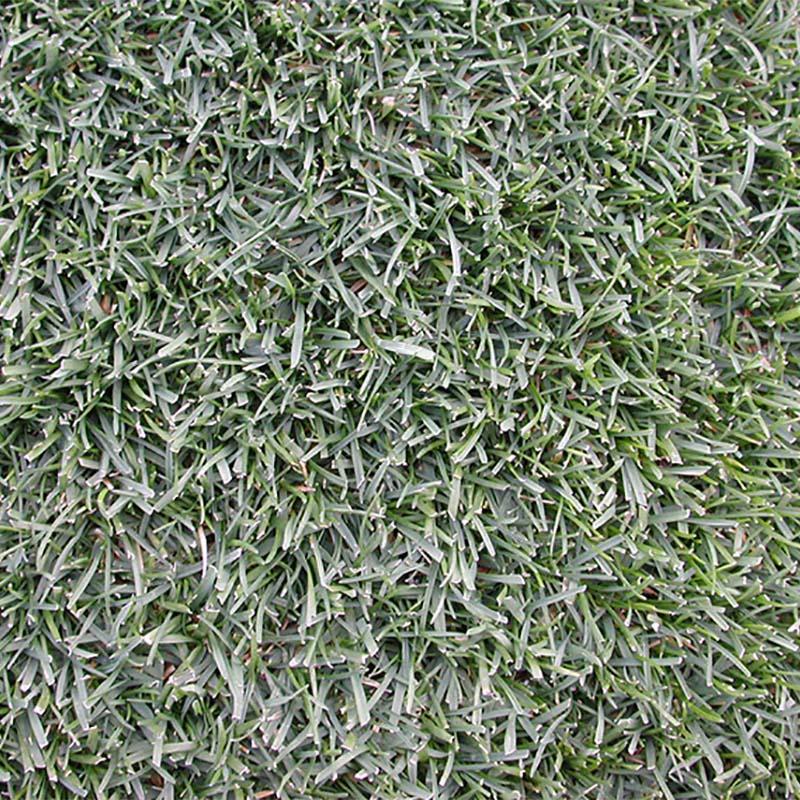 【種 10kg】 ケンタッキーブルーグラス 普通種 緑化用 緑肥 [播種期:4〜10月] 雪印種苗 米3【代引不可】