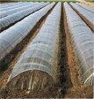 【1本】 農ポリ 厚さ0.05mm×幅6000mm×長さ100m 日A