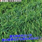 種 1kg まめむぎマルチ らい麦・ベッチ混合 春蒔き主体 タキイ種苗 緑肥 雑草抑制 ゲリラ豪雨 砂塵対策 土壌改良 米S 送料無料 代引不可
