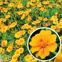 種 200g フレンチマリーゴールド グランドコントロール 緑肥作物 春まき主体 景観用 タキイ種苗 米S 送料無料 代引不可