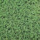 【種 2kg】 バミューダグラス リビエラ 芝生用 緑肥 [播種期:4〜7月] 雪印種苗 米S【送料無料】 【代引不可】
