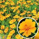 種 200g フレンチマリーゴールド グランドコントロール 緑肥作物 春まき主体 景観用 タキイ種苗 米S 代引不可