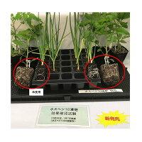 [10個]ホスベジ101-30-161Lタキイ種苗亜リン酸+グリシンベタイン[葉を強く根を元気に花の充実]液肥肥料タ種送料無料代引不可