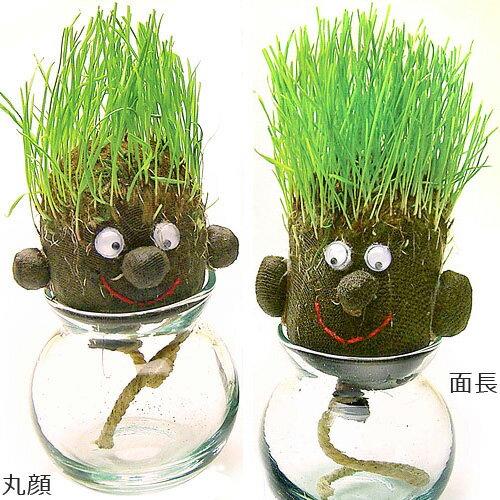 栽培キット 観葉植物 インテリア ヘアラボ hair LABO 観葉植物 ミニ おもしろ プレゼント 芝 育成キット 栽培 植物 ギフト 贈り物 かわいい おしゃれ おもしろ雑貨 おもしろグッズ