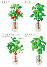 栽培キット野菜トマトメール便OKペットマト&グリーティング栽培キットハーブミニトマトバジルイチゴ青じそ苺ペットボトル自由研究夏休みグリーン緑ガーデニング