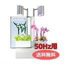 送料無料 「brio ブリオ 35 ホワイト 50Hz仕様 BRIO35-WE」 ブリオ brio 水槽 フルセット 東日本50Hz 家庭用 アクアポニックス brio35 植物 魚 | ペット用品 FW