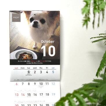 POCHI オリジナルカレンダー2019