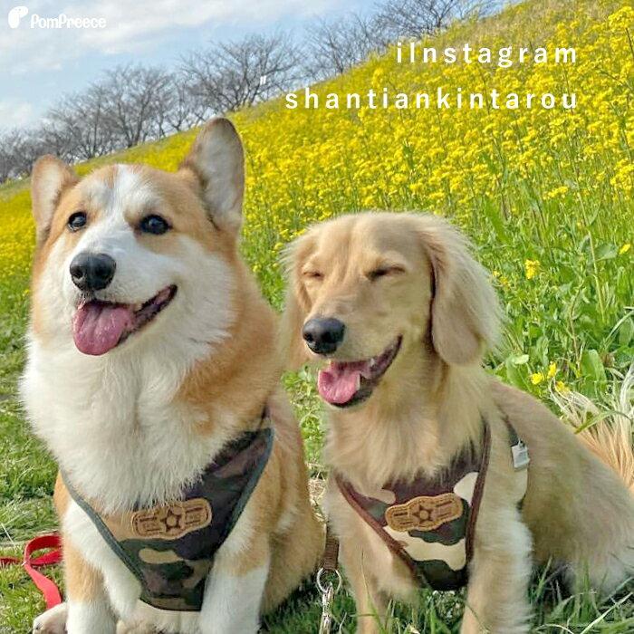 【ポイント5倍でお得】送料無料ハーネスharness小型犬中型犬ベルト犬リード犬用胴輪犬かわいい安心安全国際特許犬用スーパーハーネス(胴輪)&リードセットレトロカモフラ5号[ポンポリース]