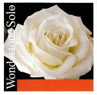 WondertoneSoloワンダートーンソロバイオリン弦1Eシルバリースチール