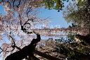 【日本の風景ポストカードのAIR】奈良県 奈良市氷室神社のし