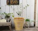 オリーブMとボヌールオリーブサークルロングSYの鉢植えオリーブの葉のデザインがかわいいグラスファイバー製のポットにMサイズのオリーブを植えました☆