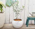 オリーブMとスフィアスラッシュポットLLWの鉢植えかわいいロゴがデザインされたテラコッタ製の丸型ポットにMサイズのオリーブを植えました☆