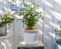 トネリコとタグハンドルポットMWの鉢植えテラコッタのかわいいタグがついたポットにトネリコを植えました