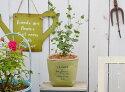 ユーカリとスムースパックサークルMGの鉢植えキュートなテラコッタ製ポットにユーカリを植えました