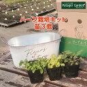 【本日P2倍】ハーブ 栽培キット(苗 セット ブリキプランター かわいい 寄せ植え ハーブティー ハ