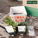 【本日P2倍】ハーブ 栽培キット(苗 セット 木製プランター かわいい 寄せ植え ハーブティー ハー