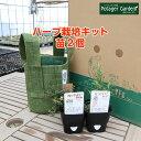 ハーブ 栽培キット ルーツポーチ 緑 苗2個(苗 セット フェルトプランター かわいい 寄せ植え ハ