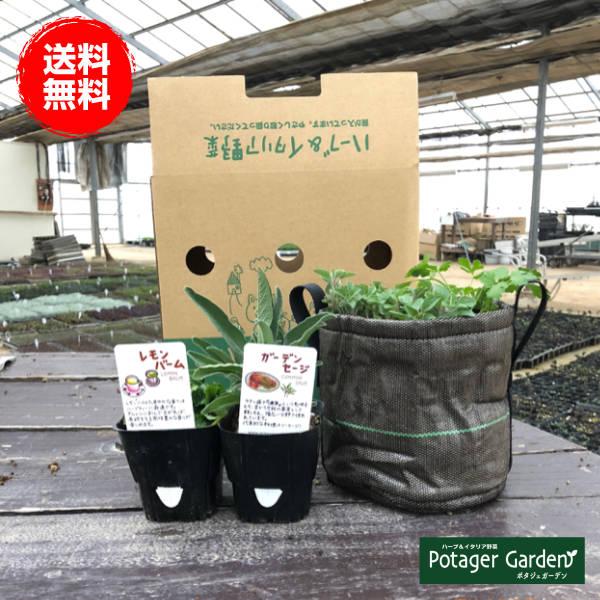 ハーブとイタリア野菜の苗専門【ハーブ栽培セット】Bacsacプランター