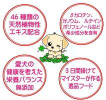 愛犬の健康を考えた栄養バランス
