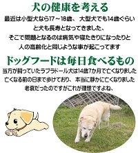 犬の健康を考える