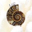 アンモナイト ペンダント|Ammonite 化石 アンモン貝...