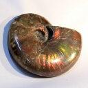 アンモナイト 化石|Ammonite レインボー アンモン貝 菊石 アンモライト fossil アンモナイト 原石 置物 生きた化石 fossil 石 鉱石 Stone 古生物 標本|メンズ レディース パワーストーン 天然石 海外直輸入価格 アンモナイト