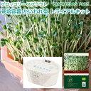 ブロッコリー スプラウト の種と栽培容器のセット オーガニッ...