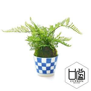 [३ ९ दुकान] [मुफ्त शिपिंग लाइन संगत] बोनसाई नकली हरी कृत्रिम पत्ते पौधे कृत्रिम फूल शिनोबु सोबाचोको चेकर / लहर अरबी / डॉट घास CUPBON | पत्ते का पौधा कृत्रिम कृत्रिम नकली हरा नकली आंतरिक आंतरिक हरा अनुशंसित स्टाइलिश जापानी कमरा जापानी शैली आधुनिक जापानी