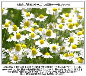 エレガントマグカップ【マグ食器コップ陶器キッチン雑貨カフェかわいいおしゃれ】