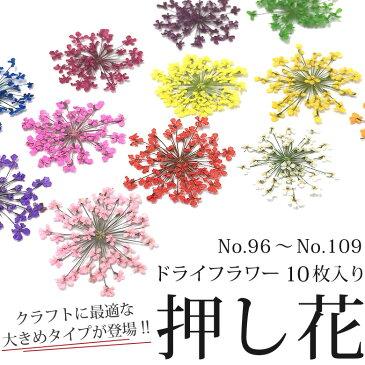 押し花 ドライフラワー (96-109) 10枚入り 大きめサイズ