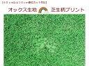 【60cm以上から購入可能、10cm単位カットOK】【オック...