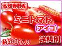 高知春野産・ミニトマトアイコ約500g入り送料別10P30Nov14