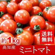 プチトマト サミット