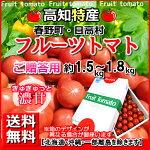 全国送料無料・高知産高糖度フルーツトマト約2kg贈答用化粧箱・春野日高徳谷諸木