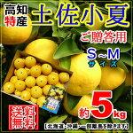【全国送料無料】・高知産・土佐小夏M〜Sサイズ約5kg贈答用日向夏ニューサマーオレンジ