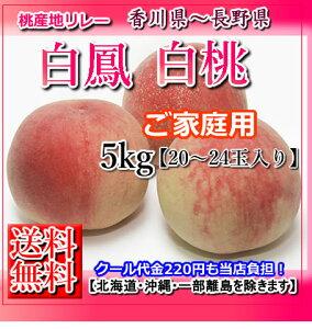 【送料無料】香川山梨長野産桃約5キロ20から24玉入りP19Jul15