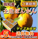 送料無料・高知産土佐ぽんかん5kgご家庭用ポンカン【RCP】P20Feb16