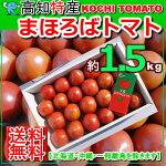 【送料無料】高知産まほろばフルーツトマト約1.5kg化粧箱北海道・沖縄送料500円トマトサミット