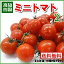 【送料無料】高知産・四国産ミニトマト プチトマト約2kg10