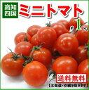 【送料無料】高知産・四国産ミニトマト プチトマト約1kg高知