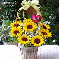 【送料無料】母の日ひまわりかすみ草アレンジメントフラワーアレンジメント人気ギフト花