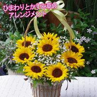 【送料無料】父の日ひまわりかすみ草アレンジメントフラワーアレンジメント人気ギフト花