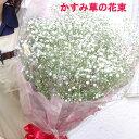 かすみ草・カスミソウ・花束ボリュームいっぱい【送料無料】プレゼントギフト写真誕生日